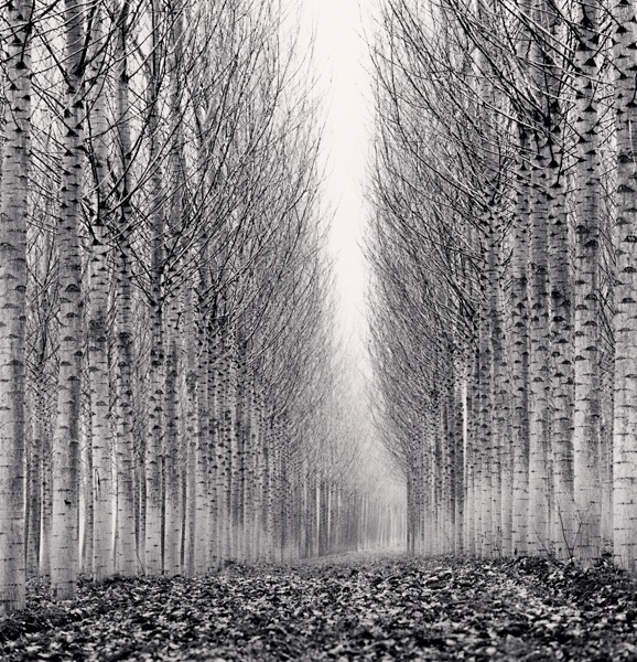 Michael Kenna Corridor of Leaves, Guastalla, Emilia Romagna, Italy 2006 Sepia Toned Silver Gelatin Print From An Edition Of 45 8 x 8 Inches
