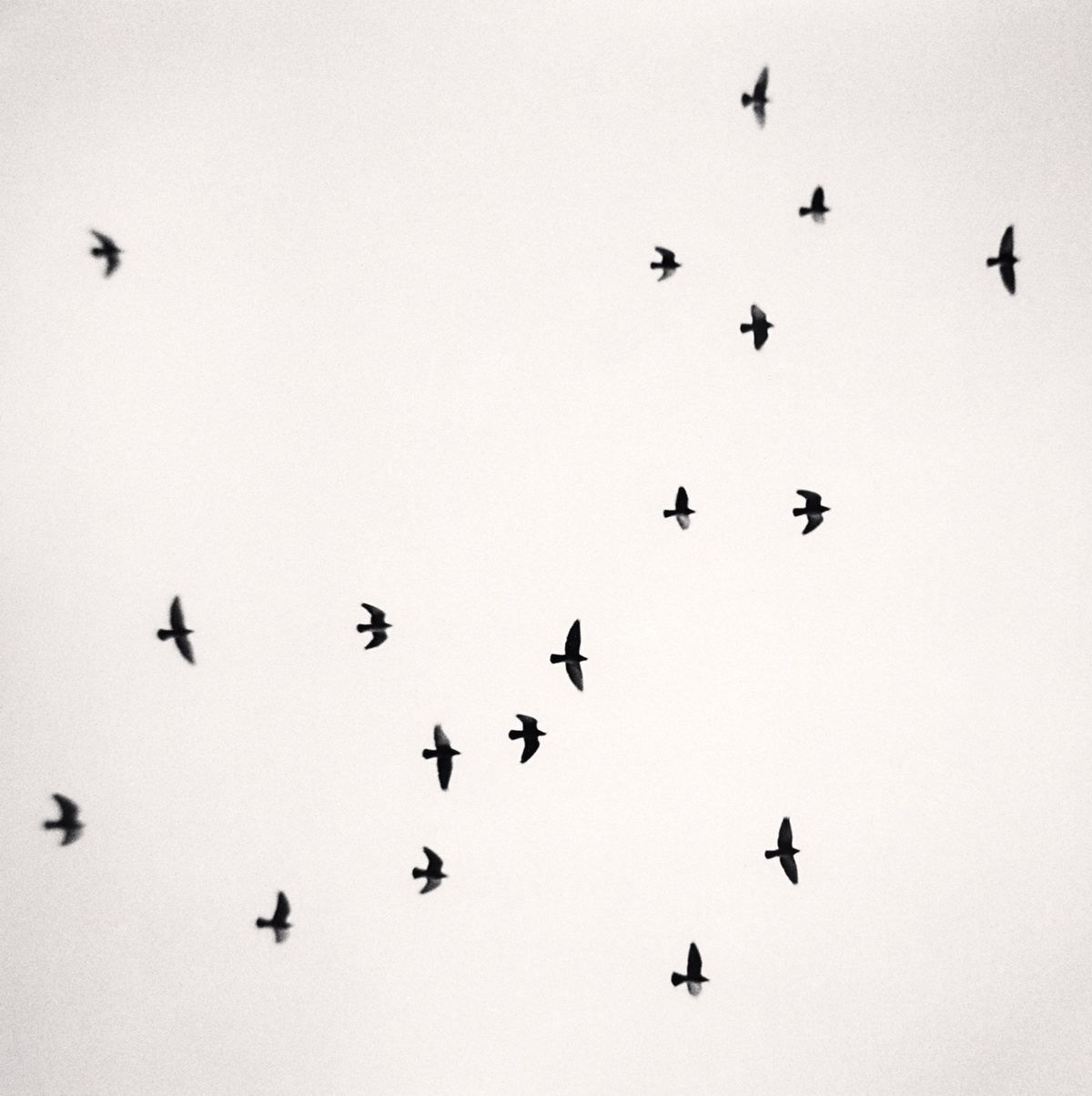 Michael Kenna Eighteen Birds, Reggio Emilia, Italy 2007 Sepia Toned Silver Gelatin Print From An Edition Of 45 8 x 8 Inches
