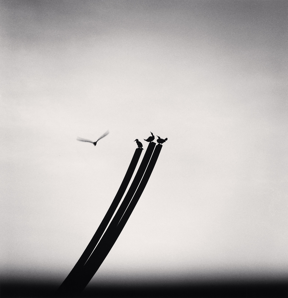 Michael Kenna Four Birds, St. Nazaire, France 2000 Sepia Toned Silver Gelatin Print From An Edition Of 45 8 x 8 Inches