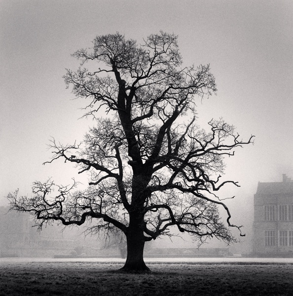 Michael Kenna Graceful Oak, Broughton, Oxfordshire, England 2005 Sepia Toned Silver Gelatin Print From An Edition Of 45 8 x 8 Inches