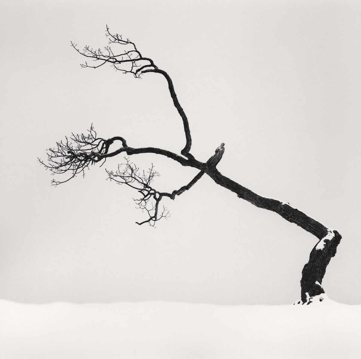 Michael Kenna Kussharo Lake Tree, Study 6, Kotan, Hokkaido, Japan 2007 Sepia Toned Silver Gelatin Print From An Edition Of 45 8 x 8 Inches