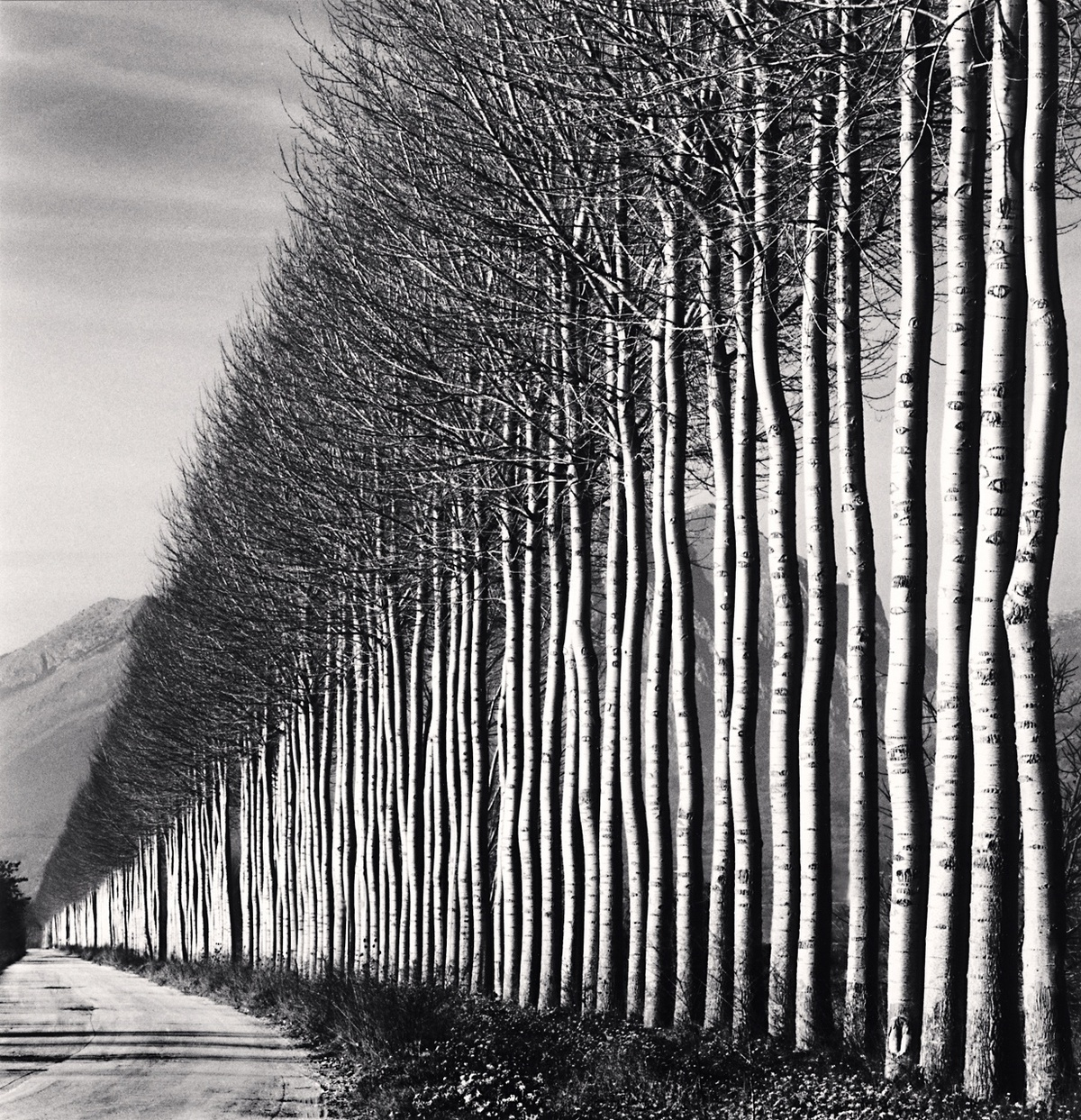 Michael Kenna Poplar Trees, Fucino, Abruzzo, Italy 2016 Sepia Toned Silver Gelatin Print From An Edition Of 25 8 x 8 Inches