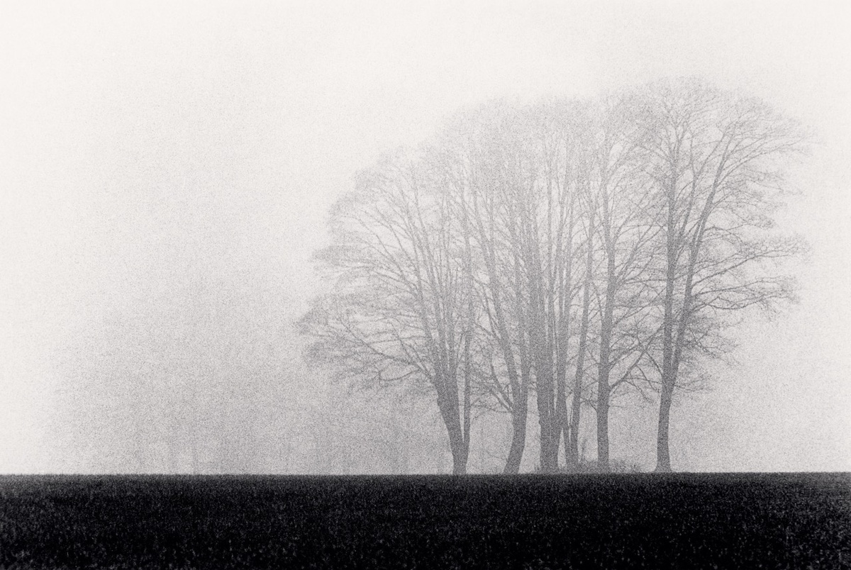 Michael Kenna Trees, Burford, Oxfordshire, England 1983 Sepia Toned Silver Gelatin Print From An Edition Of 25 8 x 10 Inches