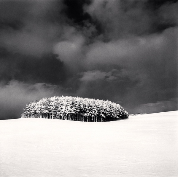 Michael Kenna White Copse Study 3, Wakkanai, Hokkaido, Japan 2004 Sepia Toned Silver Gelatin Print From An Edition Of 45 8 x 8 Inches