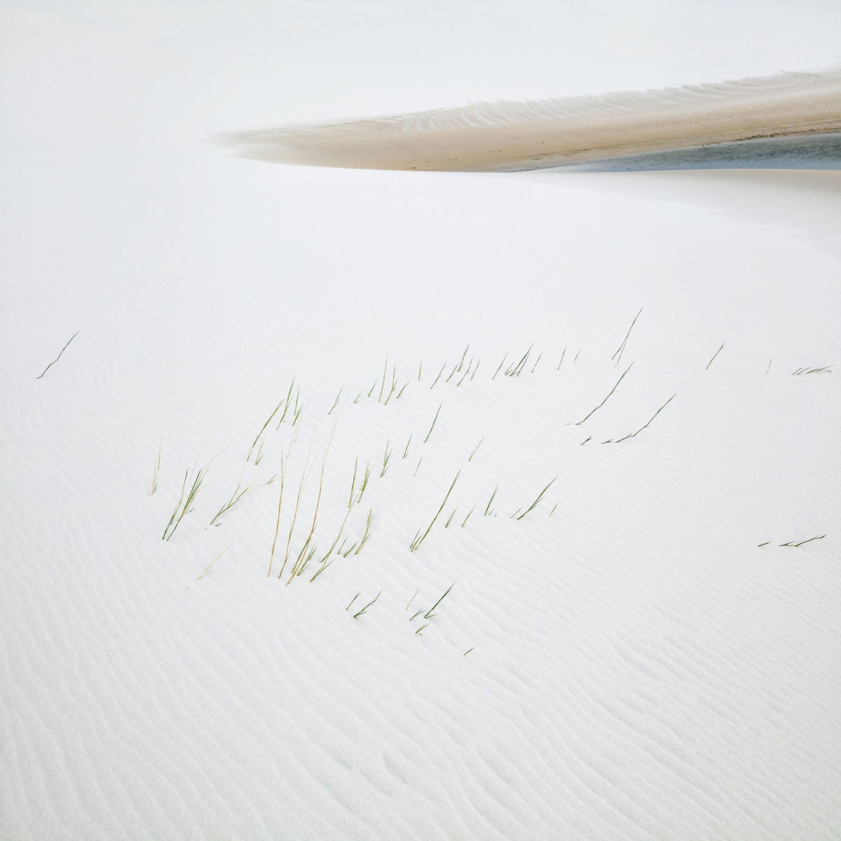 Yi Sun Grass and Lake Study 1, Lençóis Maranhenses National Park, Brazil 2018