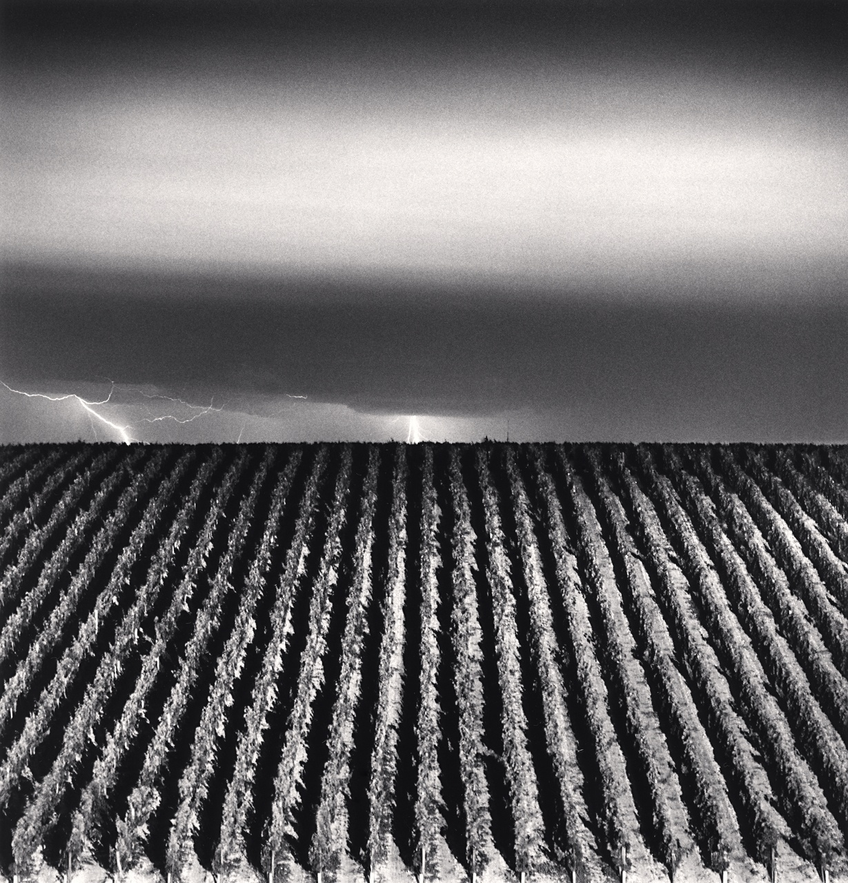 Michael Kenna  Chateau Lafite Rothschild, Study 6, Bordeaux, France 2012