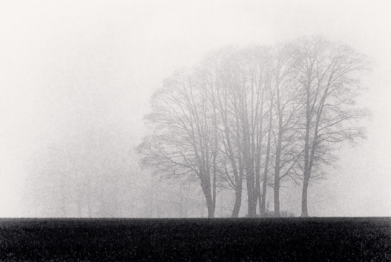 Michael Kenna Trees, Burford, Oxfordshire, England 1983