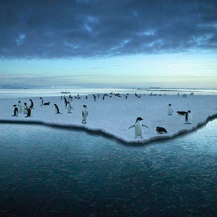 Steve Bloom, Adelie Penguins, Antarctica
