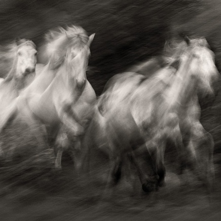 Steve Bloom, Camargue Horses, France