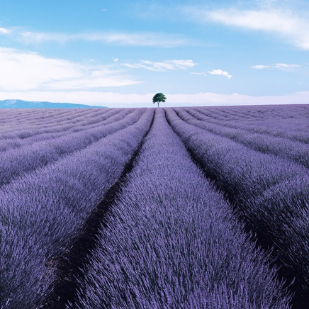 Valensole II, France