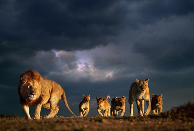 Steve Bloom, Lion family, Kenya